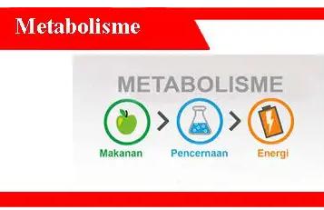 Metabolisme-Pengertian-Ciri-Fungsi-Jenis-Metode-Gejala
