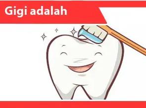 Gigi-adalah-Pengertian-Jenis-Anatomi-Bagian-dan-Penyakit-Gigi